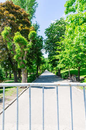 Fence at the entrance to the park. No entry for humans due to the covid-19 epidemic. Green trees on a spring or summer day