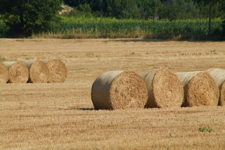 lined: hay bales lined up