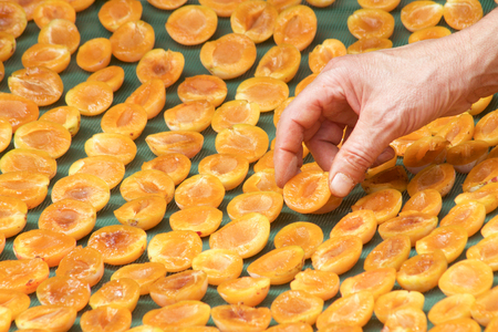 hand of man arrange plums  cut in half for drying