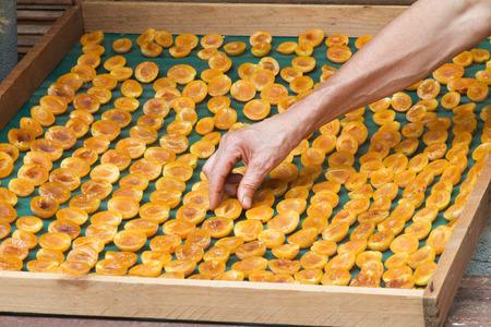 arm of man arrange prunes cut in half to dry in the sun