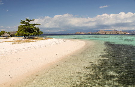 beautiful reef near Kanawa island, Indonesia