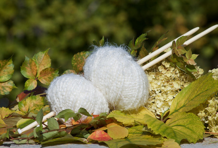 white balls of woll on autumn leaves Stock Photo