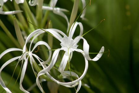 especially white orchid in Singapore garden Stock Photo
