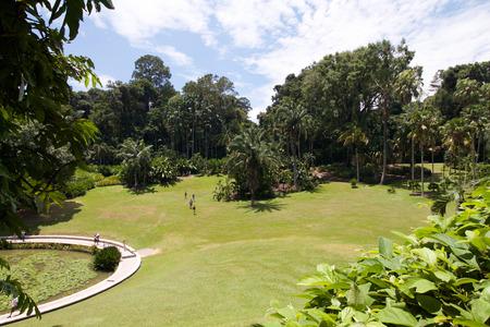 botanic: Scenic green space in Singapore botanic garden