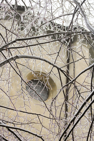 part of a linden plant completely frozen for gelicidio, north of Italy