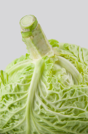 detail of  light  green cabbage just picked from the garden isolated on white