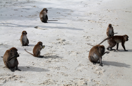 group of monkeys on the beach in thailand island