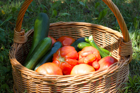 close up of harvest of  fresh tomatoes and zucchini in vegetable garden