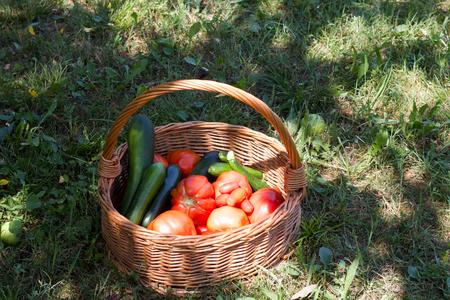 basket full of fresh vegetable garden harvest, copy space