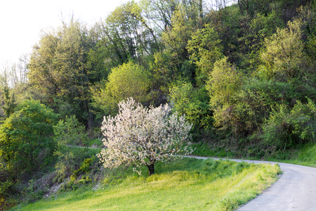 mountain road in spring at sunset, green vegetation and  tree in bloom Stock Photo