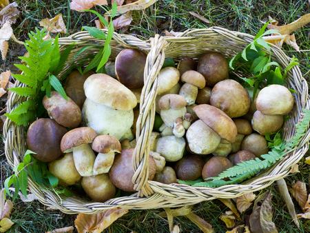 beautiful basket of boletus edulis mushrooms view from the top Stock Photo