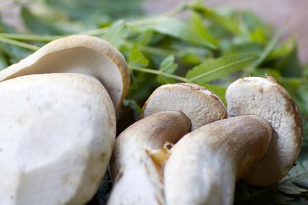 details of three porcini mushrooms,  defocused green leaves background Stock Photo
