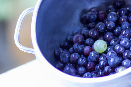 close up of black  strawberry grapes in a pot and one white ready for squeeze the juice Stock Photo