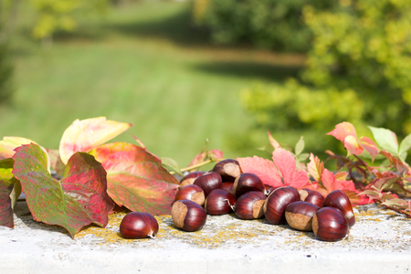group of chestnuts and fallen leaves on defocused green background, copy space Stock Photo