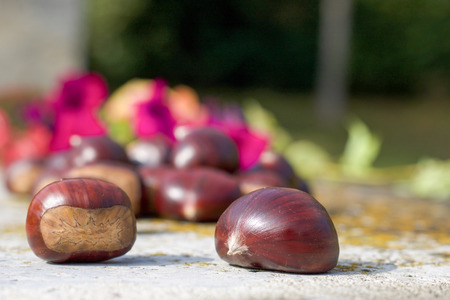 texture of two big chestnuts in nature defocused background, copy space