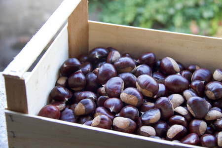 wooden box of big  brown chestnuts in the nature Stock Photo