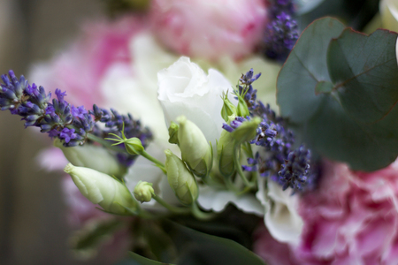 soft focus on a group of tender buds and flowers Stock Photo