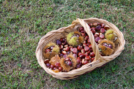 beautiful basket full of chestnuts on the grass, copy space Stock Photo