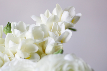 soft focus on a detail of  wedding bouquet with white fresia, light gray background