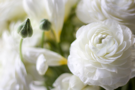 details of a close  wedding bouquet with white buttercup and buds