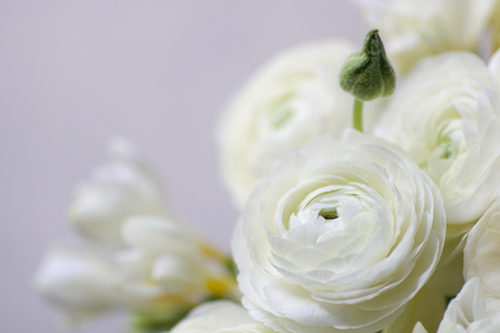 soft focus on a  wedding bouquet with white buttercups and white fresia, defocused background Stock Photo