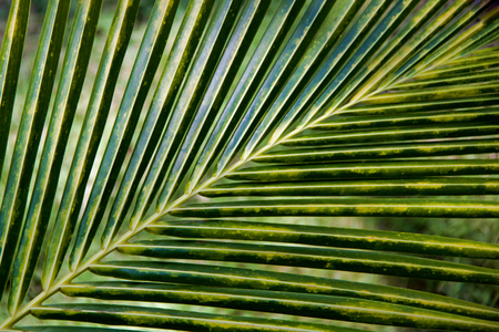 full frame of details of tropical palm leaf Stock Photo