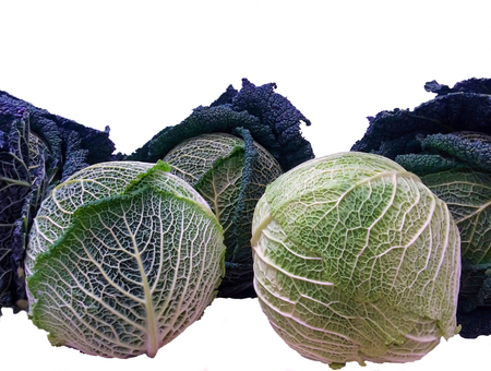 group of savoy cabbage in different colors isolated on white