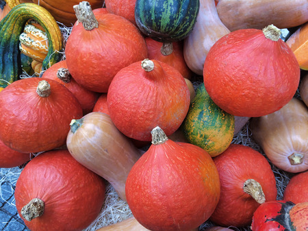 group of different varieties of pumpkins on straw Stock Photo