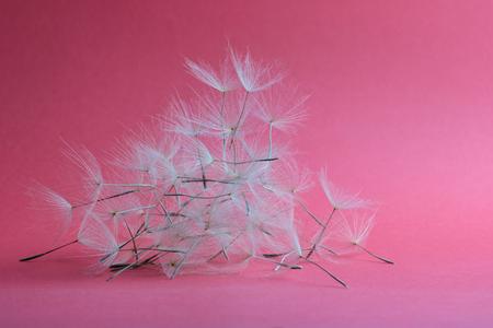 group of dry dandelion petals on pink background Imagens
