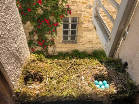 big nest for six small bird blue eggs between the window and the shutters Banco de Imagens