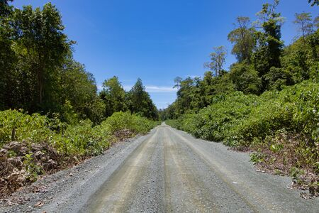 dirt road in the jungle in a summer day, island of borneo