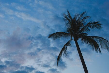 silhouette of palm tree against blue sky and clouds at sunset 写真素材
