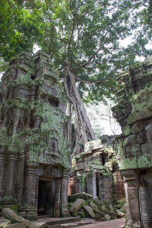 details of a large tree stuck in the ruins of ta prohm temple in Cambodia Stock Photo
