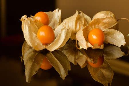 close up of orange ripe alkekengi fruits on a reflective surface