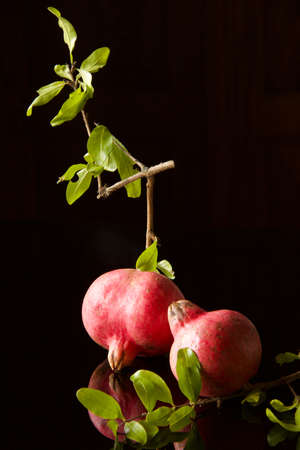two pink pomegranates on small branches isolated on dark background, vertical