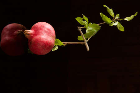 one ripe pomegranate on small branch isolated on dark reflected background, copy space Stock Photo