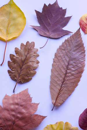 autumn leaves in different colors and texture, white background