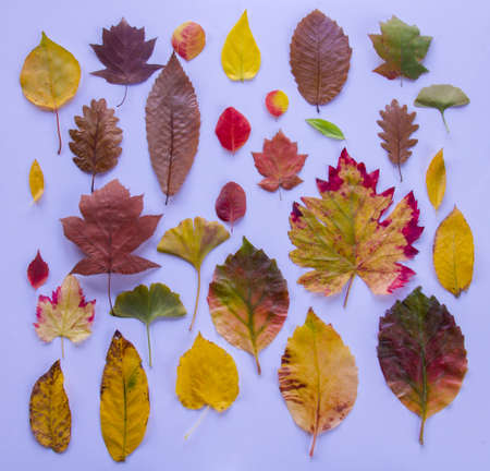 group of multicolored leaves spread out on white background, full frame