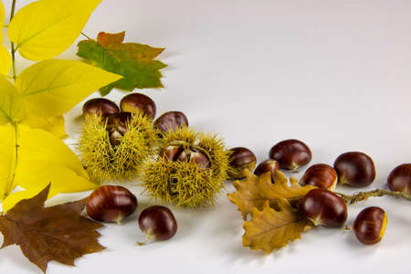 autumn background with chestnuts and leaves, copy space