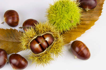 close up of chestnuts husk and brown leaves, copy space Stock Photo