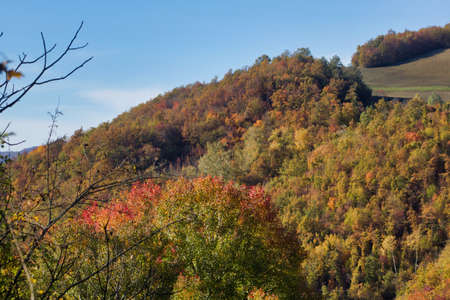multicolored tree foliage in autumn landscape on the hills, Italy
