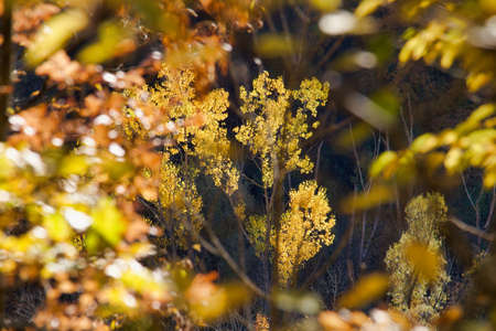 selective focus on yellow foliage through tree branches in the forest