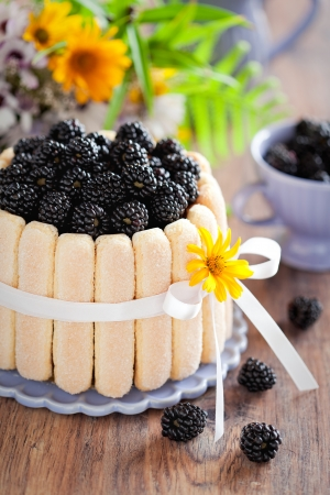 Charlotte biscuit cake with blackberrys and chocolate cream, selective focus  Stock Photo - 14711398