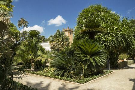 Beautiful Tropical Plants, Trees captured in Valencia, Spain-07/19/2019: Jardin Botanico de la Universidad de Valencia, The Botanical Garden of the University of Valencia was founded in 1567 for the study of medicinal plants.