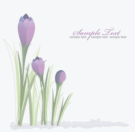 Crocus spring floral background Vector