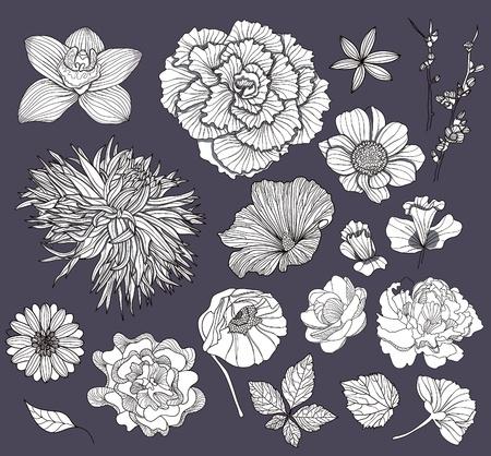 dalia: Conjunto de flores. Elementos florales.