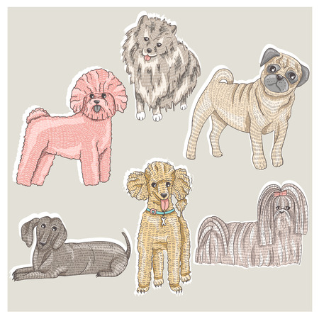 Set of cute little breed dogs  Bichon, pug, spitz, dachshund, poodle, shih tzu  Vector
