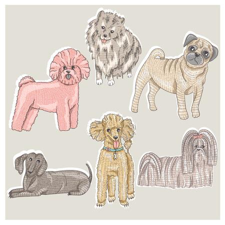 spitz: Set of cute little breed dogs  Bichon, pug, spitz, dachshund, poodle, shih tzu