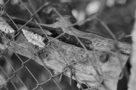 old fence: old fence wood and steel