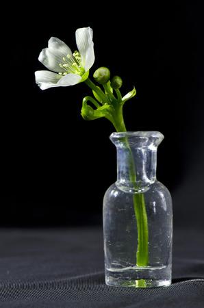 carnivorous: carnivorous flower